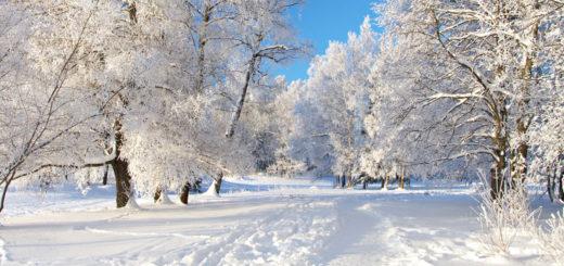 белые снеги