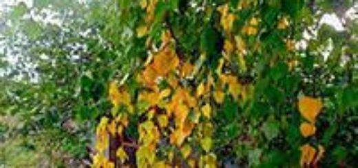 осень в цветастой накидке