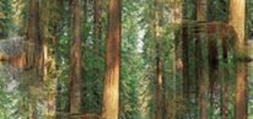 привет дружище старый лес