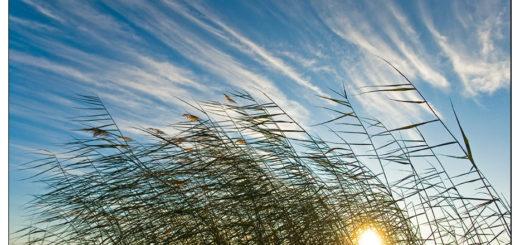 буйный ветер