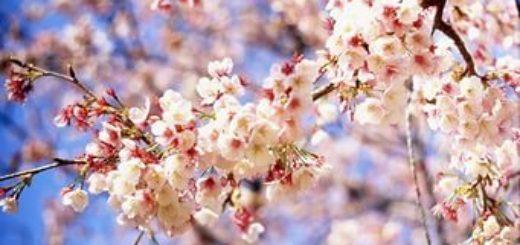 весною все любовью дышит