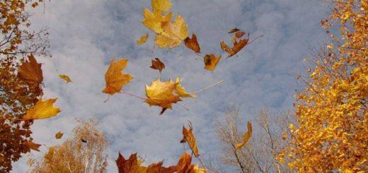 радость и горе как листья осенние