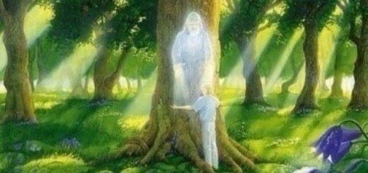 У леса добрая душа